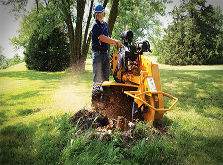 Stump grinding in Rhode Isand